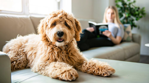 Property laws: New rules for pets in rental premises
